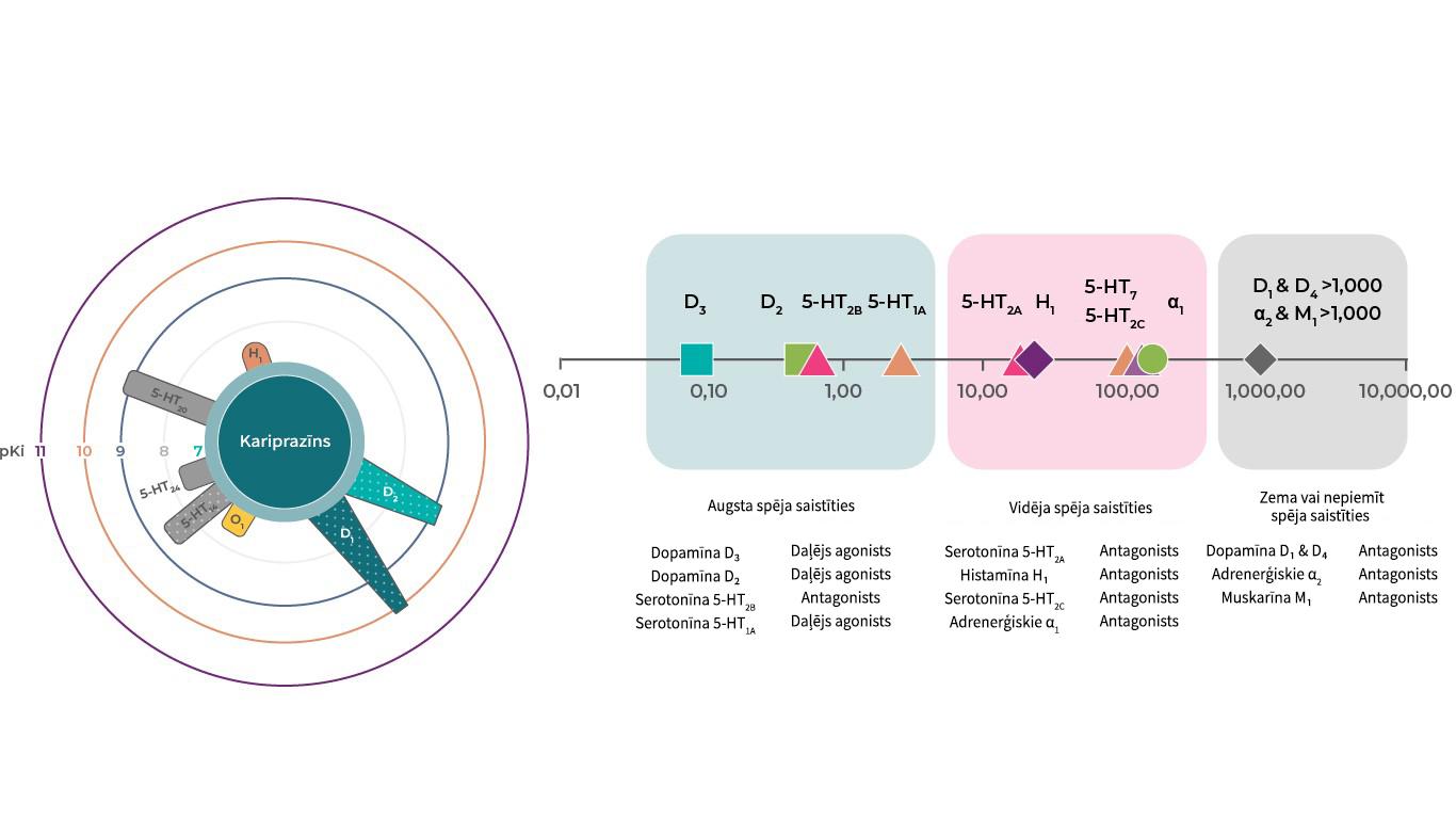 Kariprazīna receptoru profils