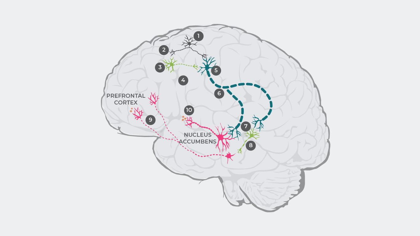 Šizofrēnijas patofizioloģija