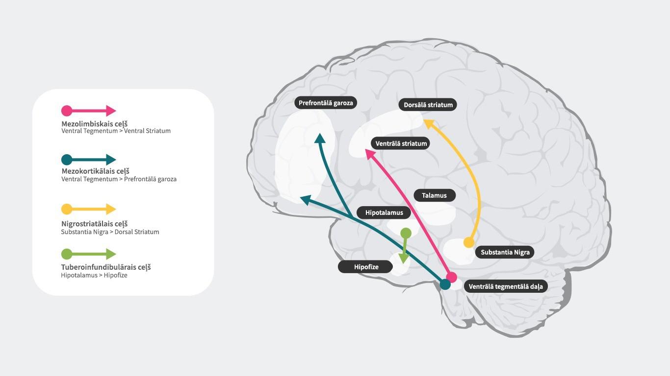 Četri galvenie patofizioloģiskie ceļi, kurus saista ar šizofrēniju